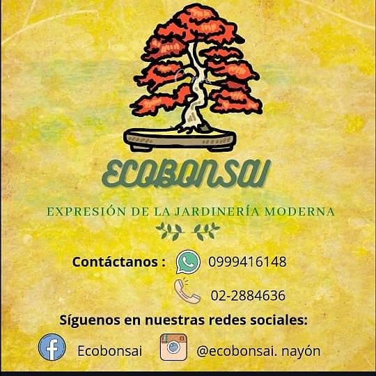 Ecobonsai