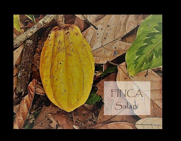 Finca Salapí