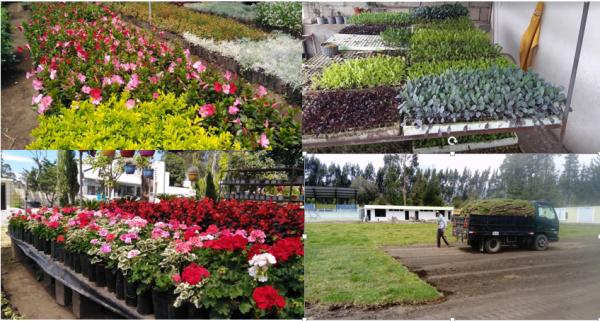 Naturaleza y Flor